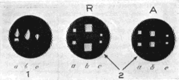 Fig. 9. Diagrams of the Images of Purkinje